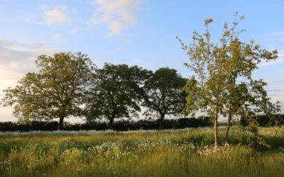 Tijdens een eerste gesprek is één van de meest voorkomende vragen: 'Wat is de kostprijs van een tuinontwerp?
